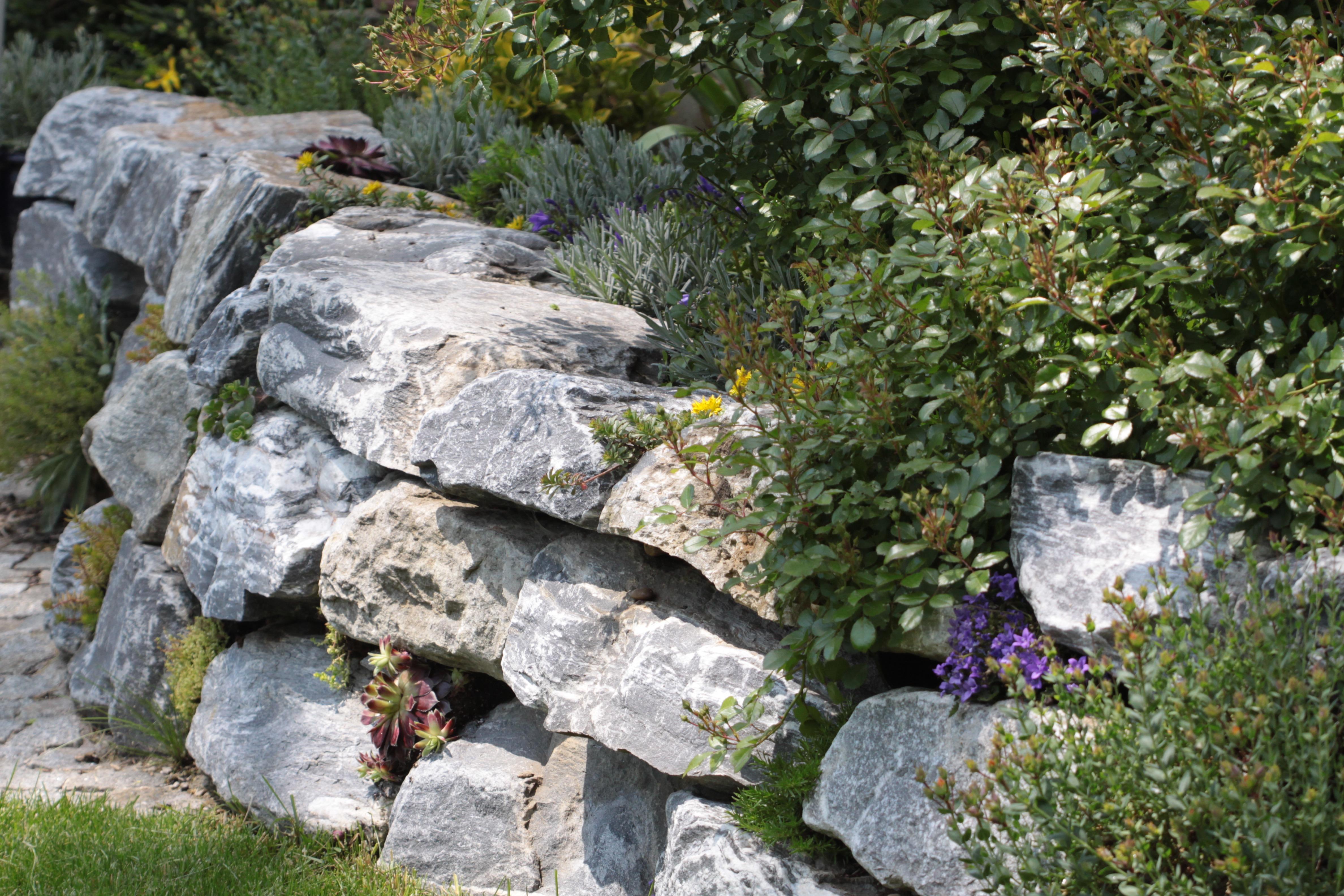 Gartengestaltung Libelle - Isabella Pfenning - Gartenplanung und Gartengestaltung