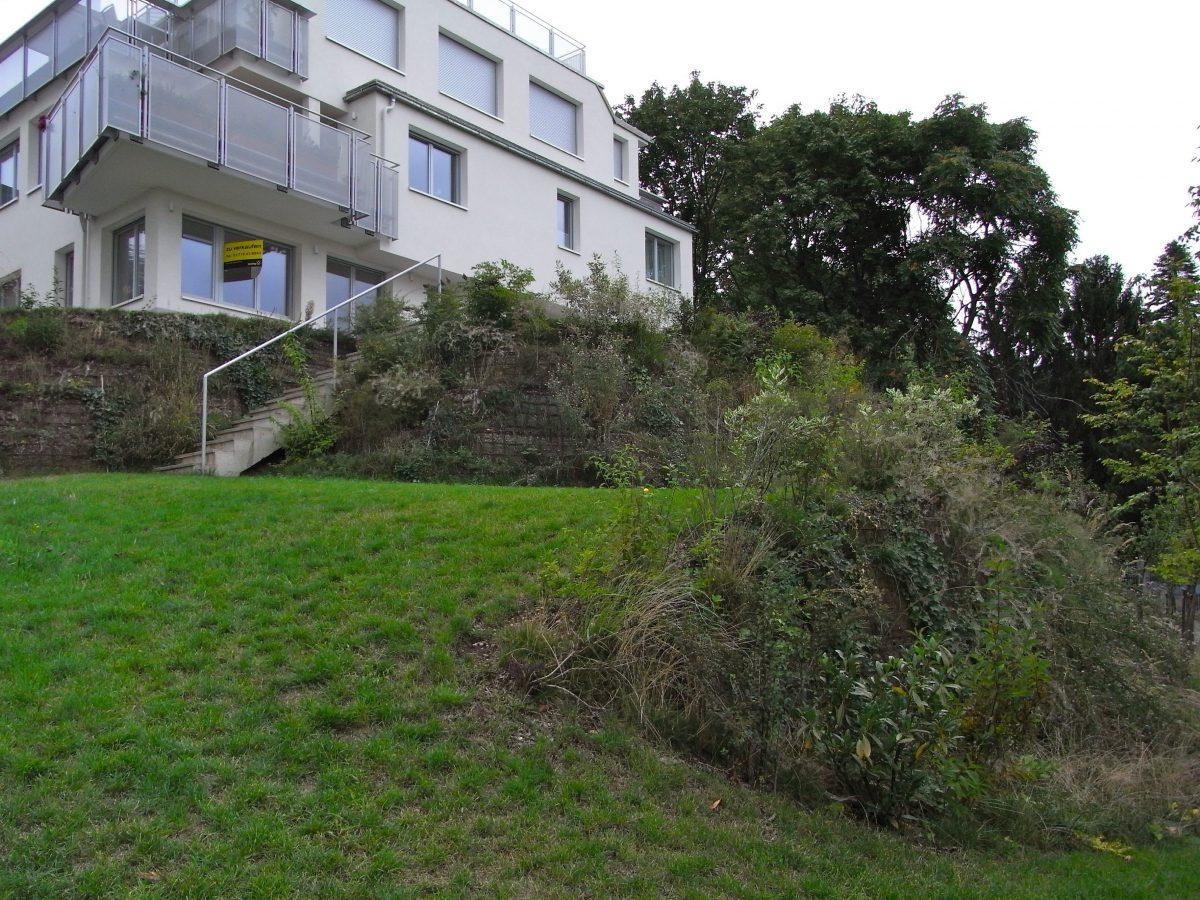 Gartengestaltung Libelle - Isabella Pfenning - Gartengestaltungs-Projekt Schafberg - Ausgangssituation