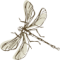 Gartengestaltung Libelle - Isabella Pfenning - Logo- Libelle